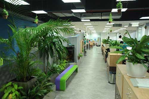 Xu hướng thiết kế nội thất văn phòng hiện đại gần gũi với thiên nhiên