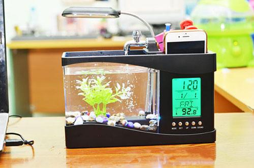Bể cá mini cũng là một trong những đồ vật để trên bàn làm việc