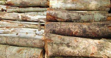 Tìm hiểu về đặc điểm của gỗ mít, gỗ mít có tốt không, cách nhận biết