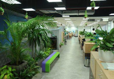 Tại sao mô hình thiết kế văn phòng xanh green office ngày càng HOT?